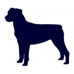 Samolepka na auto-pes v autě - rotvajler